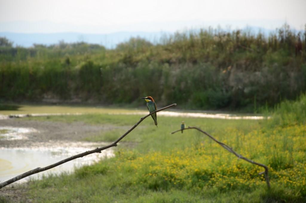 riserva naturale dell'isola di cona