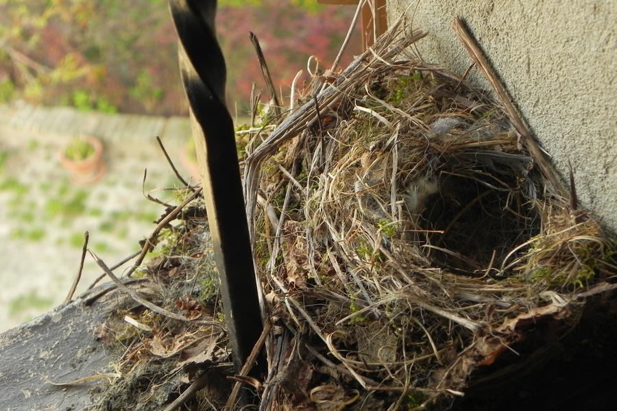 nido sulla finestra