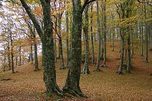 MTB FIAB/CAI: la Foresta del Teso @ Foresta del Teso | Toscana | Italia