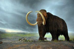 Sulle tracce dei mammut con AIMED @ Modena | Modena | Emilia-Romagna | Italia