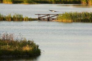 Casse di espansione del Tresinaro-Area protetta rete natura 2000 @ Modena
