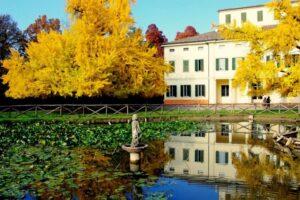 Il Ginko Biloba di Villa Gandini di Formigine @ Formigine